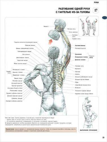 Упражнения на трицепс / Комплексы. Упражнения. Картинки.