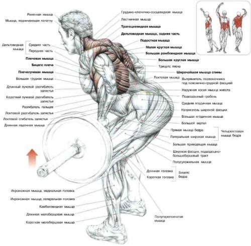 Быстрый рост мышц Как НАКАЧАТЬ ШИРОКУЮ СПИНУ