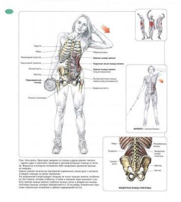 Упражнения с гантелями для косых мышц живота.