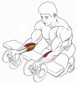 Упражнение на предплечие с гантелями.