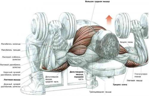 Обвиснет ли грудь с имплантами
