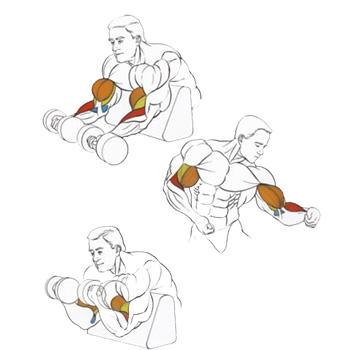 Упражнение с гантелями на скамье Скотта.